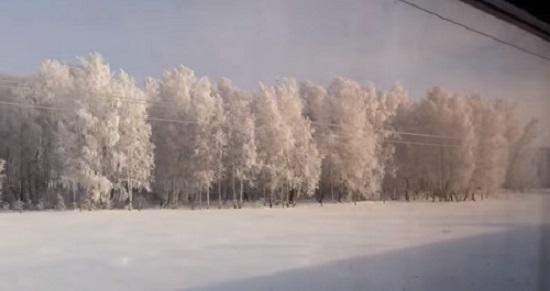 タイガの森